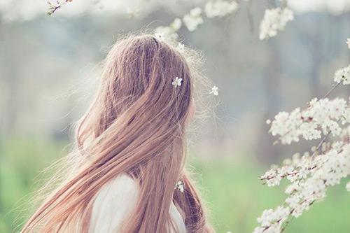 Amendoeiras em Flor | Lenda e Poema