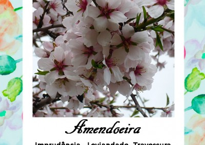 Linguagem das Flores | Amendoeira