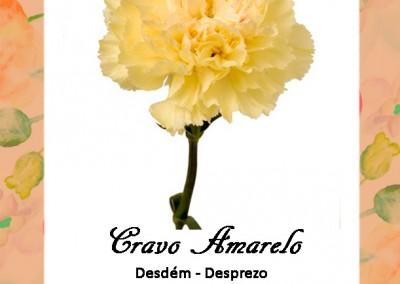 Linguagem das Flores| Cravo Amarelo