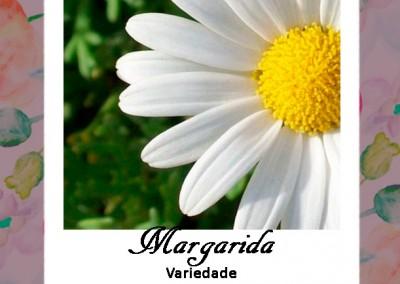 Linguagem Flores| Margarida