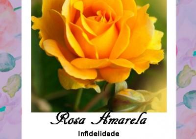 Linguagem das Flores | Rosa Amarela