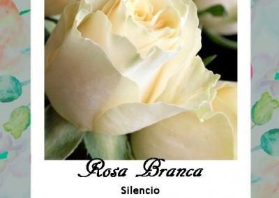 Linguagem das Flores | Rosa Branca