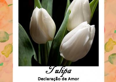 Linguagem das Flores | Tulipa