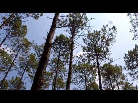 Pinhal de Leiria – Sons de Verão